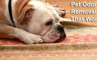 pet-odor-removal